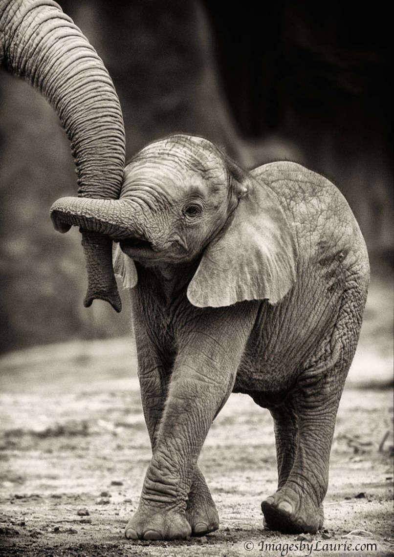 amor-elefantes