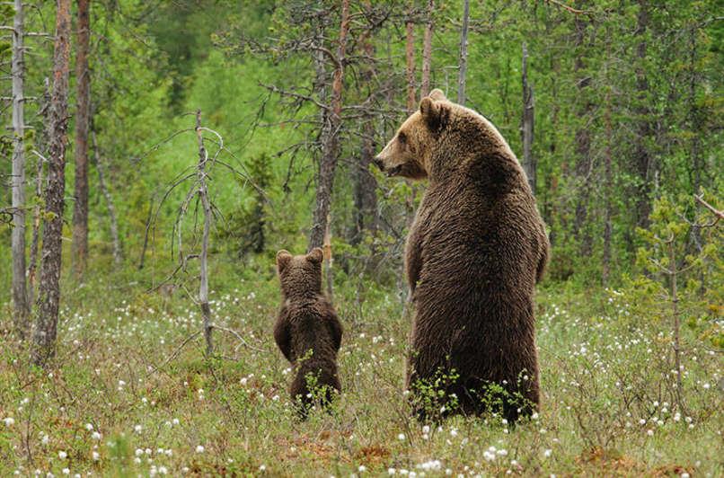 amor-osos