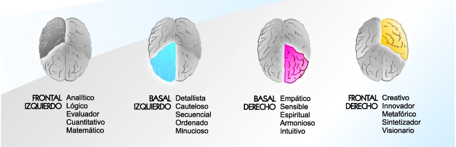 cuadrantes-del-cerebro