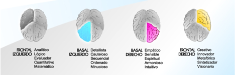 partes-cerebro