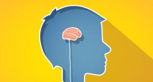 cerebro chico