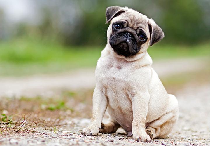 C mo tener un perro sano revistamoi - Como banar a un perro ...