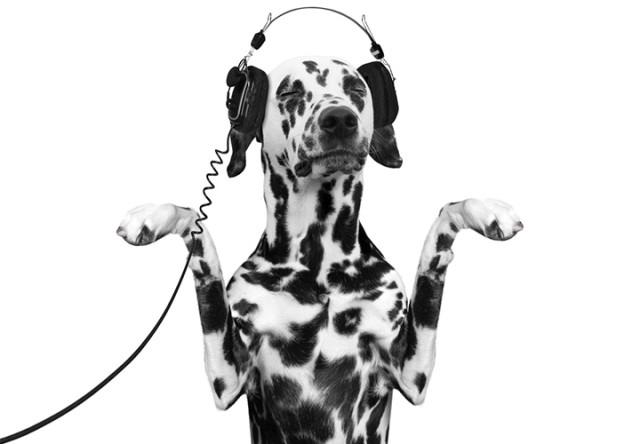 perro bailando