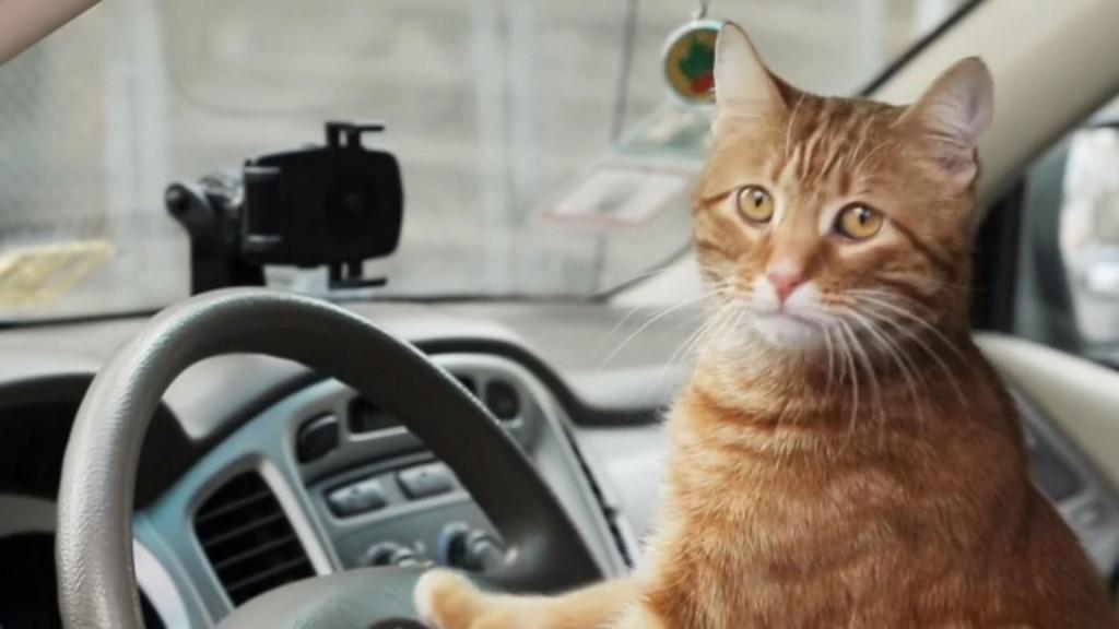 gato-uber