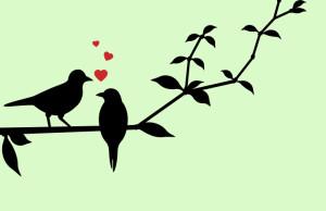 pajaros romanticos