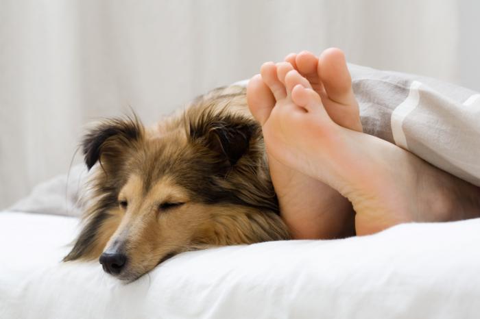 dormir-con-perros
