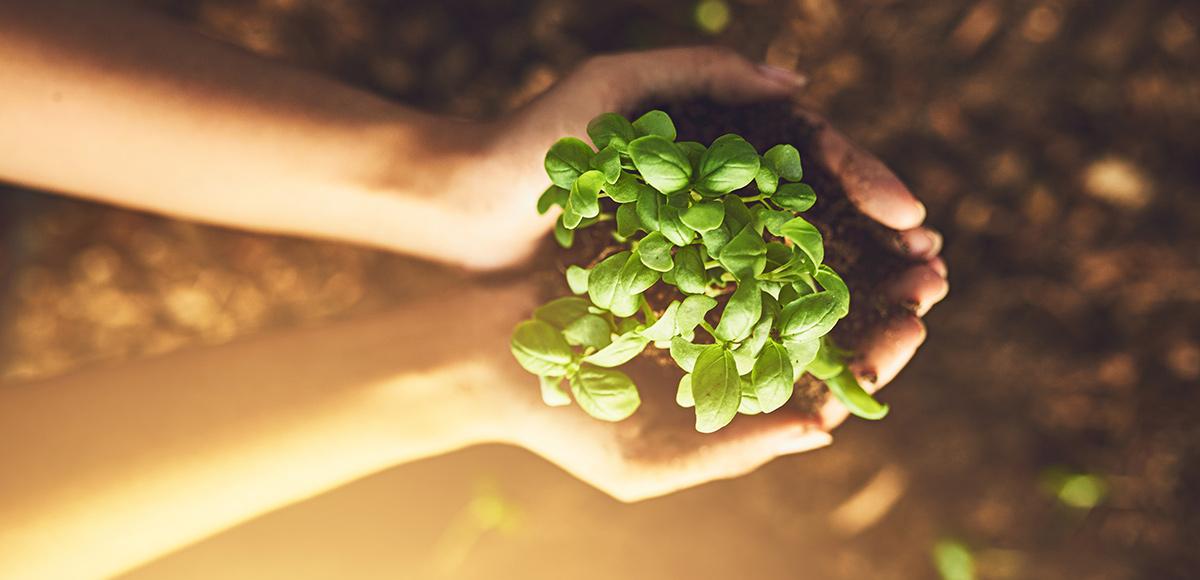 ¿Cómo celebrar al Medio Ambiente?